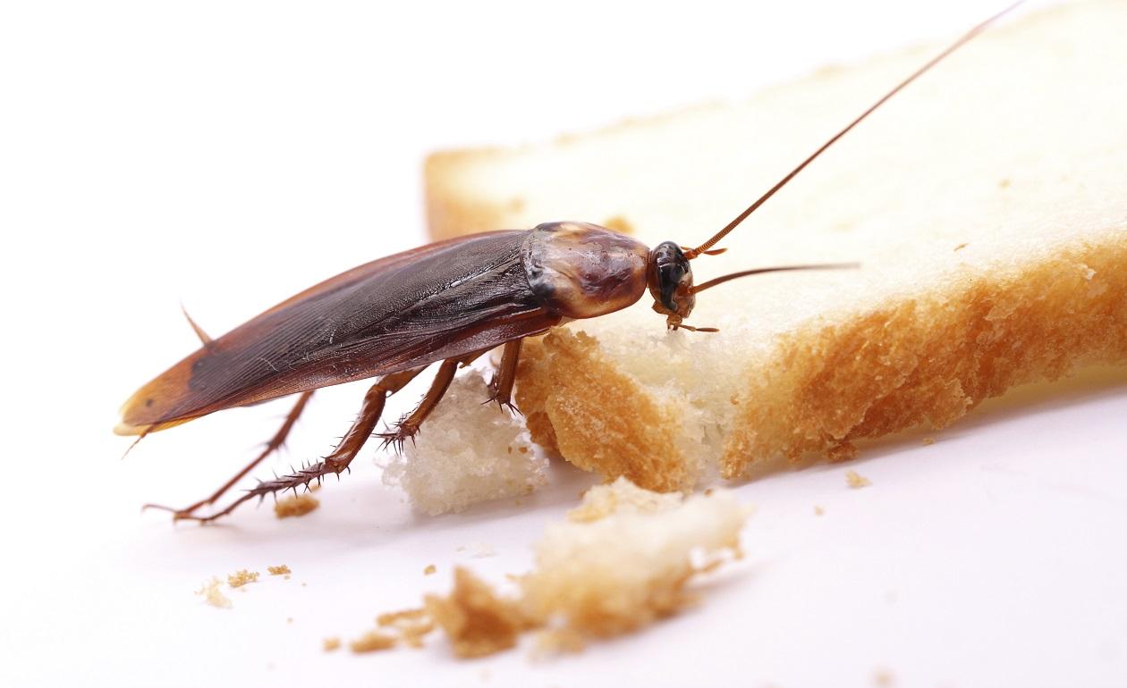 como eliminar las cucarachas