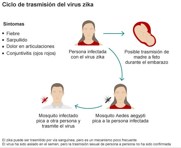 ciclo de vida del zika