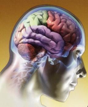 beneficios del complejo b para el cerebro