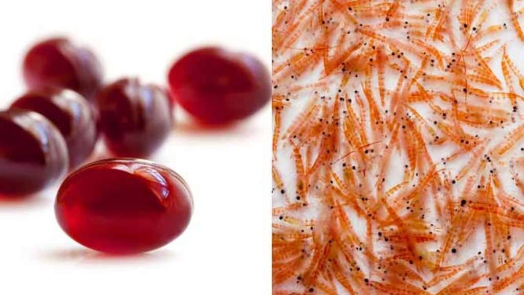 que es el krill